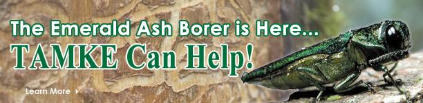 Emerald Ash Borers - Tamke Can Help